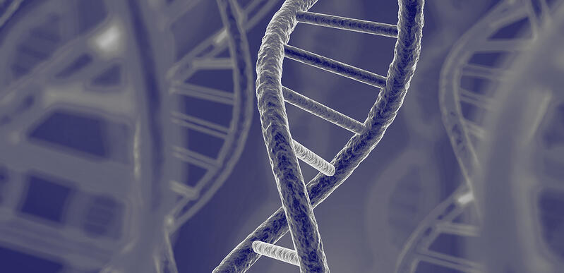 EFSA's Requirements for Whole Genome Sequencing of Microorganisms